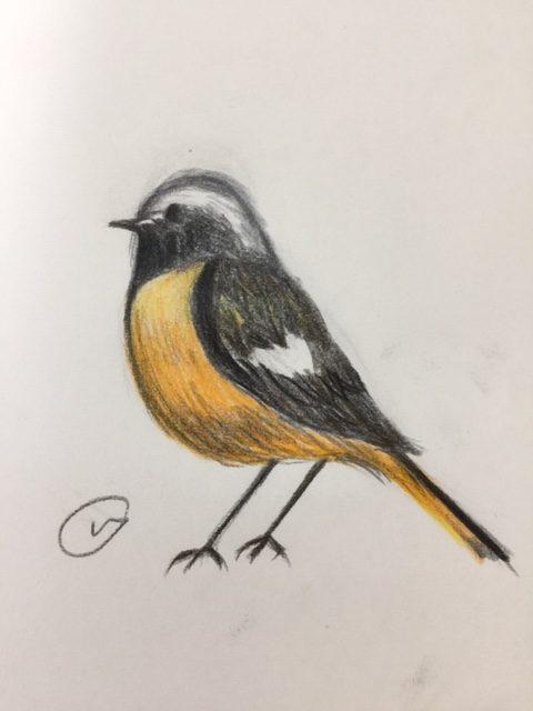 僕の鳥生活はジョウビタキから始まった